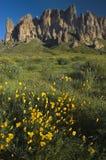 Superstition-Berg und Frühling Wildflowers Stockfotos