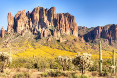 Superstition. Blooming Sonoran Desert at Superstition Mountains royalty free stock image