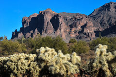 Superstition Mountain with cholla. Scenic view of Superstition Mountains with cholla cactus in the foreground Royalty Free Stock Image