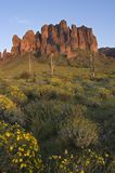 Superstition Mountain and field of Brittlebush Stock Images