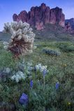 Superstition Mountain and field of wildflowers Stock Image
