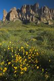 Superstition Mountain and Spring Wildflowers. The Sonoran Desert turns colorful during the spring when fields of Mexican Golden Poppy, Lupine, and brittlebush stock photos