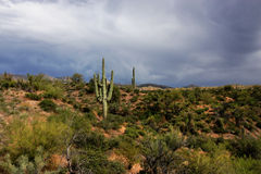 Free Superstition Mountains Stock Image - 12493911