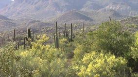Superstition Mountains, Arizona stock video