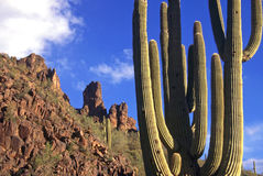 Superstition Mountains Cactus. A Saguaro cactus with the Superstition Mountains in the background - located in Arizona stock images