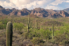 Superstition Wilderness Stock Images