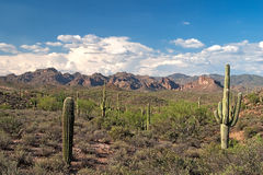 Superstition Wilderness Stock Photography