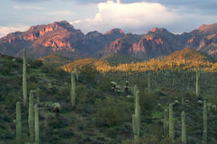 Superstition Wilderness Royalty Free Stock Photography