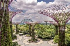 Supertree和温室庭院的由海湾 新加坡 库存图片