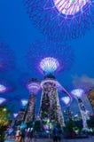 Supertree树丛夜视图滨海湾公园的6月18日, 免版税图库摄影