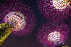 Supertree树丛的夜视图 免版税库存图片