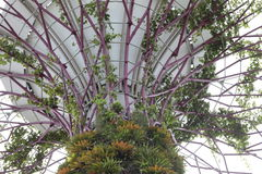 Supertree树丛 免版税库存照片