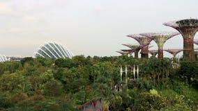 Supertree雕塑` s的黄昏视图在庭院的由2016年11月18日的海湾在新加坡 股票录像