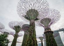 Supertree aux jardins par la baie à Singapour Image stock