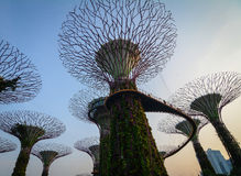 Supertree aux jardins par la baie à Singapour Photos libres de droits