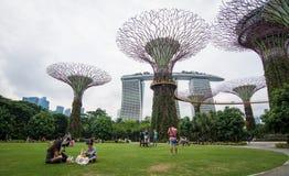 Supertree aux jardins par la baie à Singapour Image libre de droits