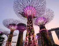 Supertree bij de tuin in Singapore Stock Fotografie