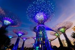 Supertree dunge i Singapore Arkivbild