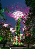 Supertree dunge Singapore Arkivfoto
