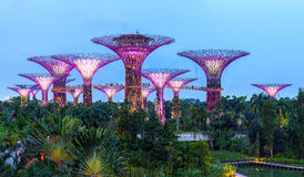 Supertree dunge Singapore Royaltyfri Foto