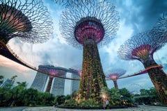Supertree gaj przy ogródami zatoką przy nocą, Singapur Fotografia Royalty Free