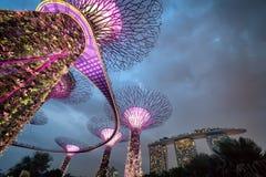 Supertree gaj przy ogródami zatoką przy nocą, Singapur Zdjęcie Royalty Free