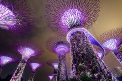 Supertree gaj przy ogródami zatoką przy nocą, Singapur Fotografia Stock