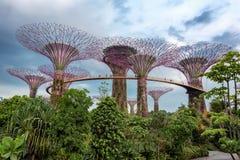 Supertree gaj przy ogródami zatoką przy nocą, Singapur Obraz Stock