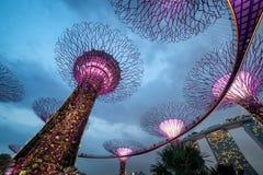 Supertree gaj przy ogródami zatoką przy nocą, Singapur Zdjęcie Stock