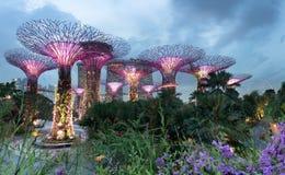 Supertree gaj przy ogródami zatoką przy nocą, Singapur Obrazy Stock