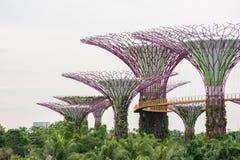 Supertree gaj przy ogródami zatoką, Singapur Fotografia Royalty Free