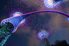 Supertree gaj w ogródzie zatoką, Singapur Obraz Stock