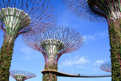 Supertree garden in the morning, garden by the bay. Singapore - JULY 10, 2017 : Supertree garden in the morning, garden by the bay Royalty Free Stock Images