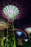 Supertree garden by night in Singapore Royalty Free Stock Image