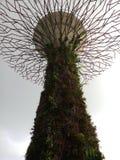 Supertree royalty free stock photos
