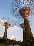 Supertree-Gardens By The Bay, Singapore Stock Images