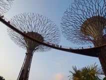 Supertree-Gardens By The Bay, Singapore Royalty Free Stock Photos
