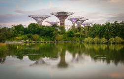 Supertree at Gardens by the Bay in Singapore Stock Photo