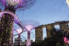 The Supertree at Gardens by the Bay Royalty Free Stock Images