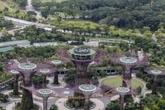 Supertree Grove an den Gärten durch die Bucht in Singapur Lizenzfreie Stockfotografie
