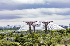 Supertree Grove an den Gärten durch die Bucht in Singapur Stockfotos