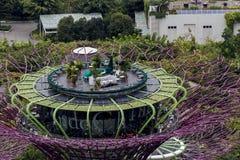 Supertree Grove an den Gärten durch die Bucht in Singapur Stockfoto