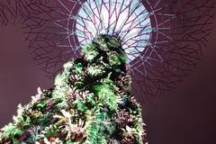 Supertree Grove. Garden by the bay main attraction Royalty Free Stock Image
