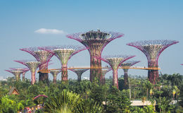 Supertree grove in garden by the bay Stock Image
