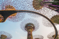 Supertree grove in garden by the bay Royalty Free Stock Photo