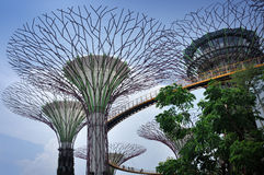 The Supertree Grove at Gardens by the Bay Stock Images