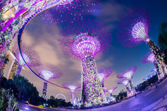 The Supertree Grove at Gardens by the Bay Stock Image
