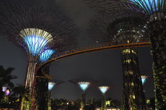 Supertree Grove at Gardens by the Bay in Singapore Royalty Free Stock Image