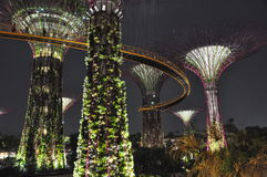 Supertree Grove at Gardens by the Bay in Singapore Royalty Free Stock Photo