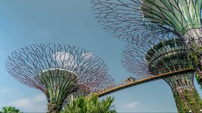 Supertree Grove OCBC Skyway at the Gardens by the Bay Time Lapse